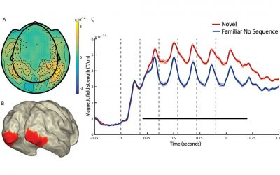 Paper published in Journal of Cognitive Neuroscience